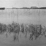 Wieringermeer linda oud
