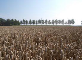 In polderland aan eenzaamheid gewennen